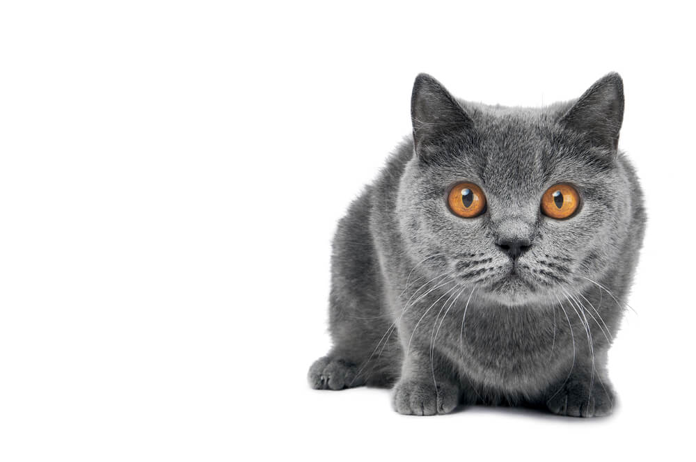 Eyes Wide Open Cat