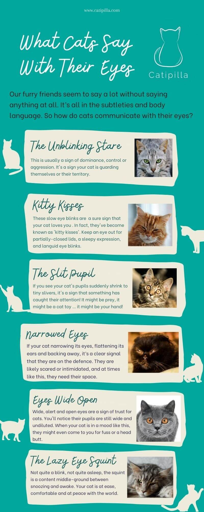 What Cats Say With Their Eyes