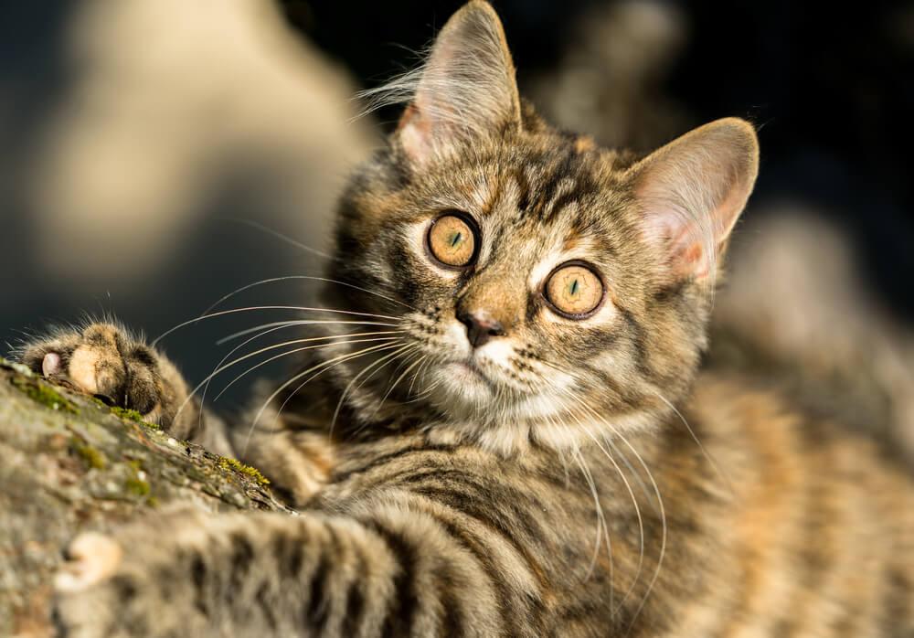 slit pupil cat
