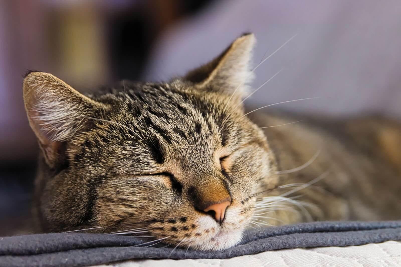 cats love sleeping